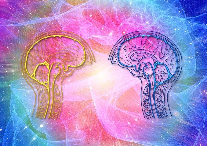 Cognitive Fitness And Longevity